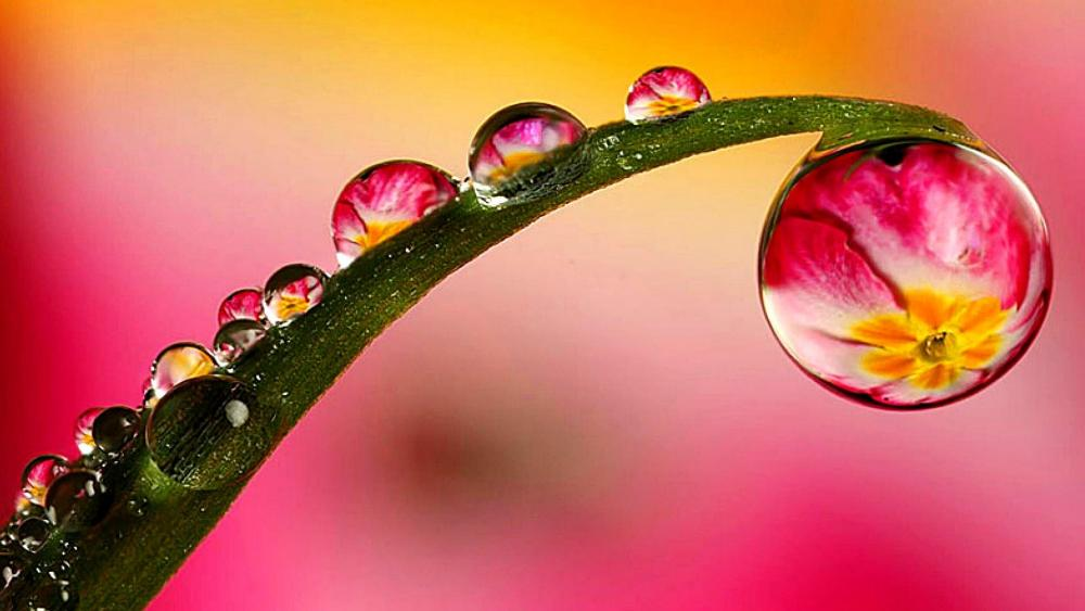 Macro Water Drops wallpaper