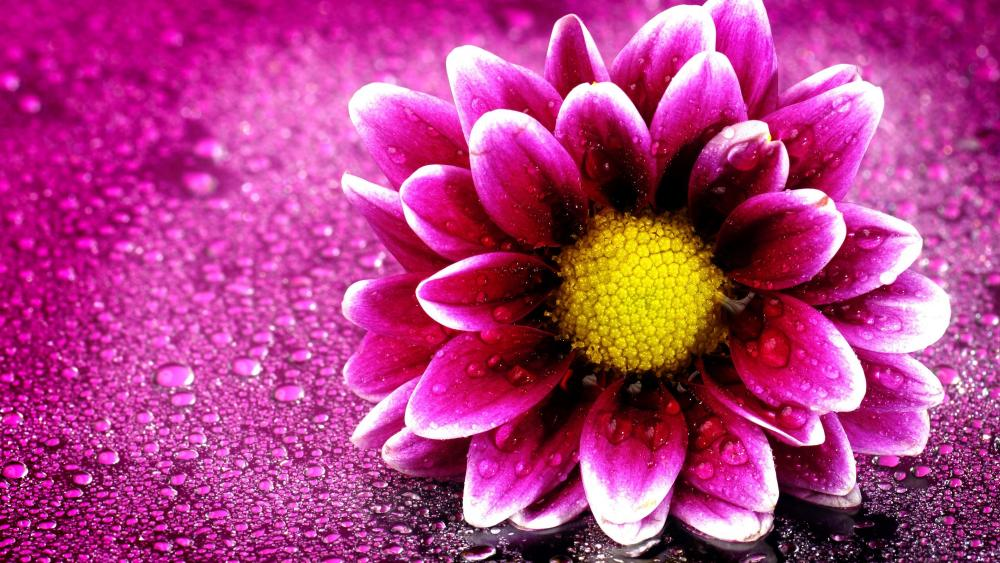 Flower with water drops wallpaper