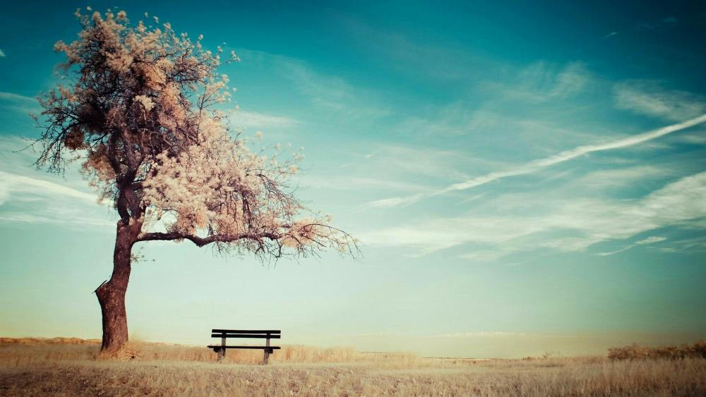 Lone tree on the field with a bench wallpaper