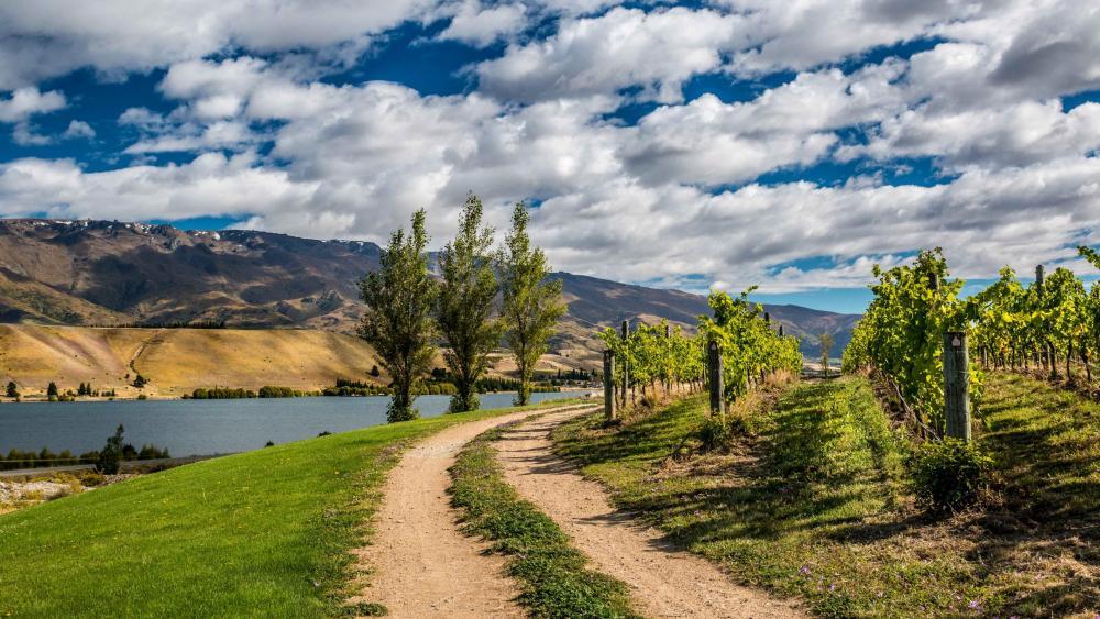 New Zealand vineyard - Northburn wallpaper