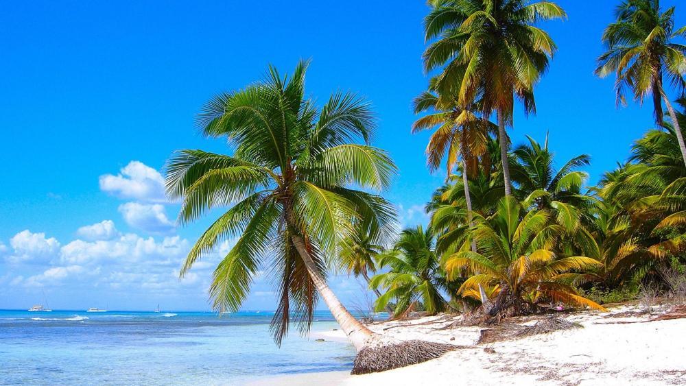 Saona Island (Isla Saona) - Dominican Republic wallpaper