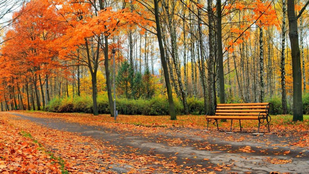 Autumn in the park  wallpaper