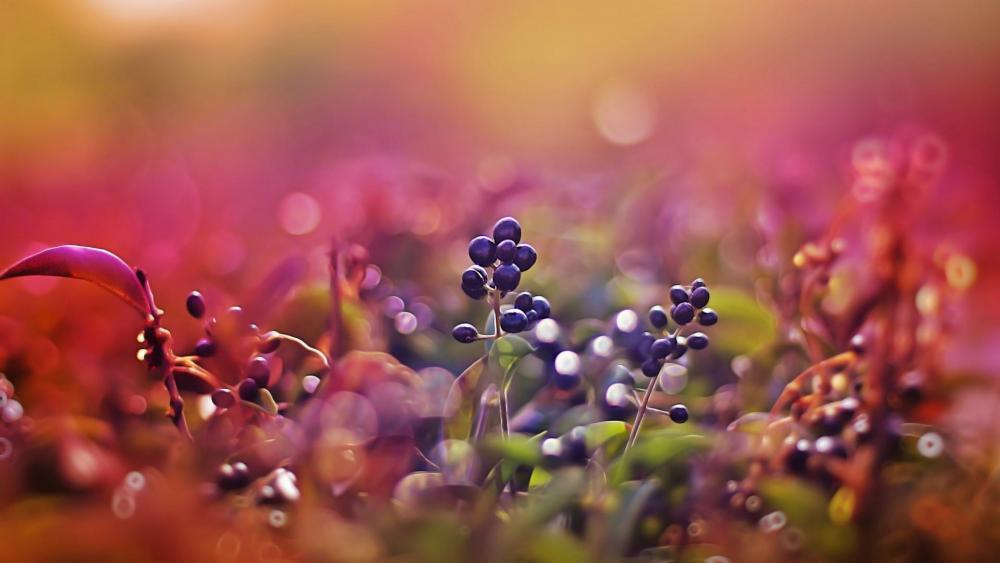 Black berries on the bush wallpaper