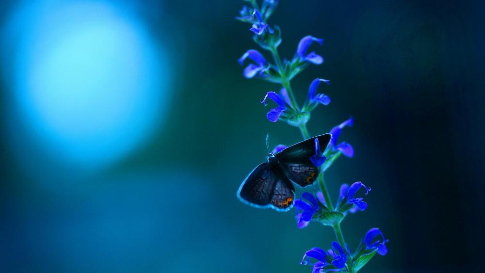 Butterfly on the flower  wallpaper