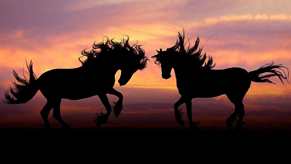 Horse couple in the sunset wallpaper
