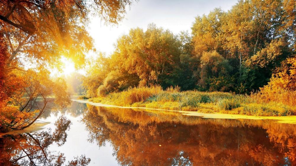 Colors of the autumn sunrise  wallpaper