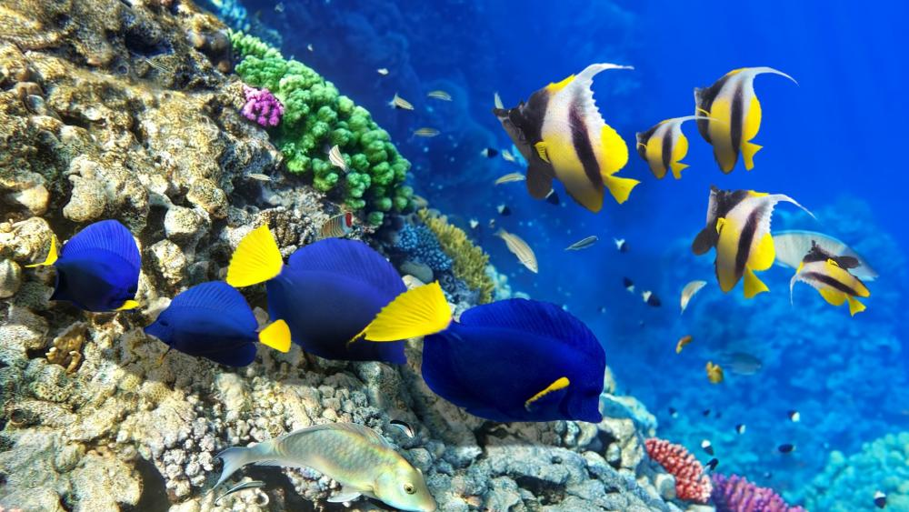 Coral reef with colorful fishes wallpaper