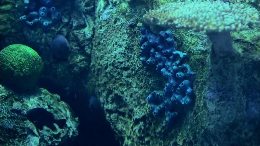 Underwater photography  wallpaper