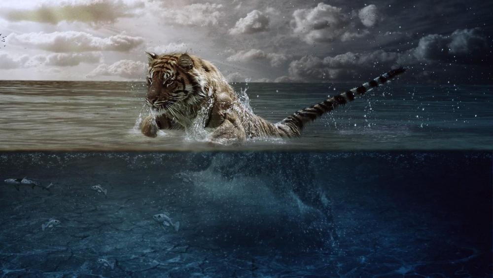 Tiger hunting in the water wallpaper