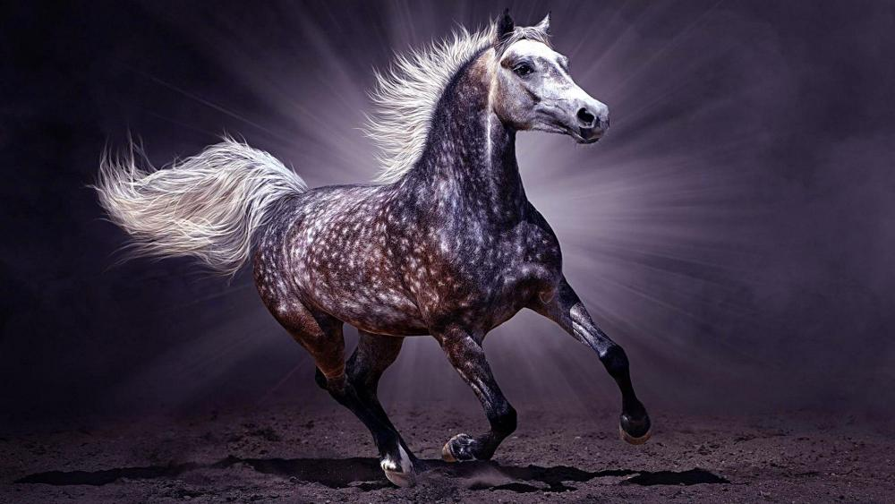 Arabian horse  wallpaper