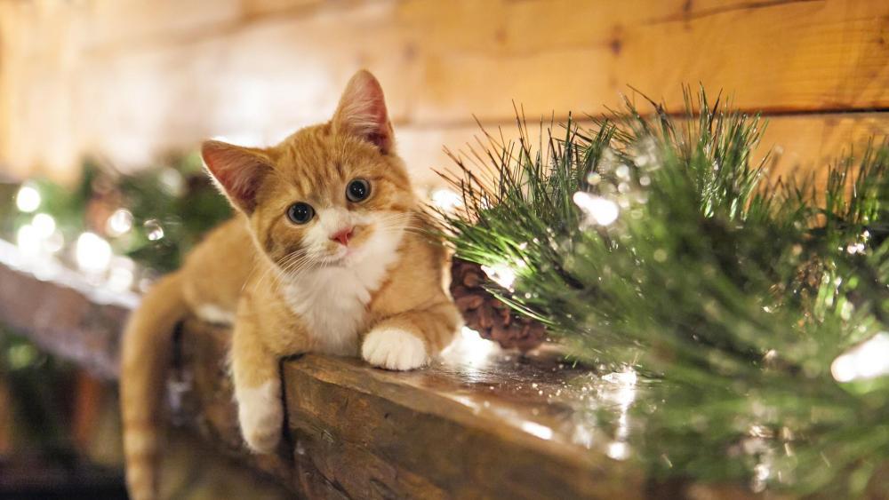 Cat on the mantel wallpaper
