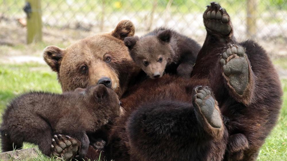 Bear family in the zoo wallpaper