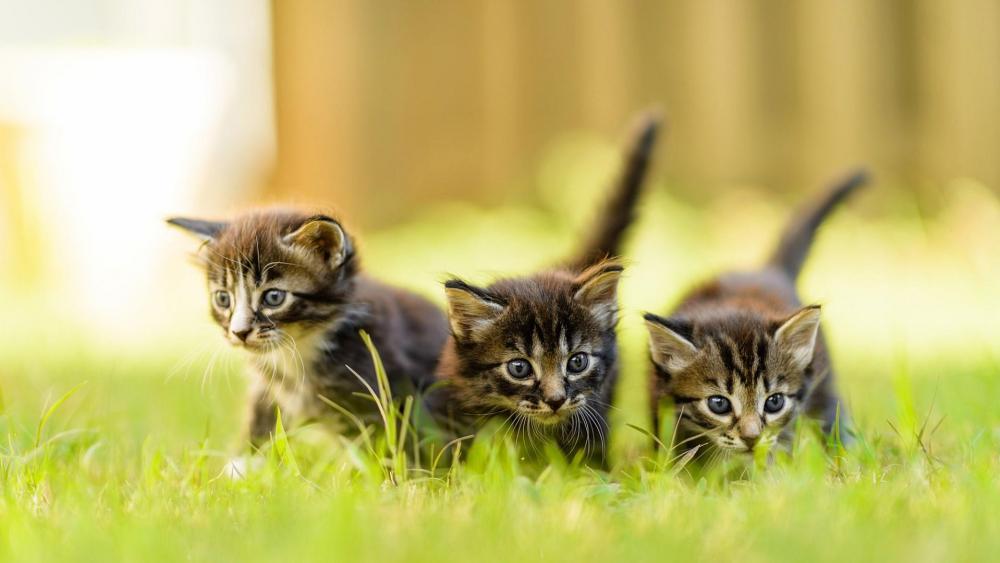 Cute baby kittens in the garden  wallpaper