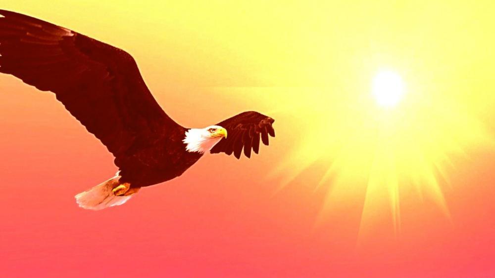 Bald eagle graphics wallpaper