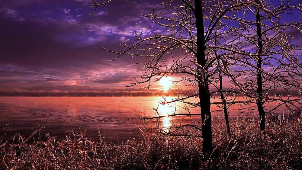Frozen trees near a lake in Canada wallpaper