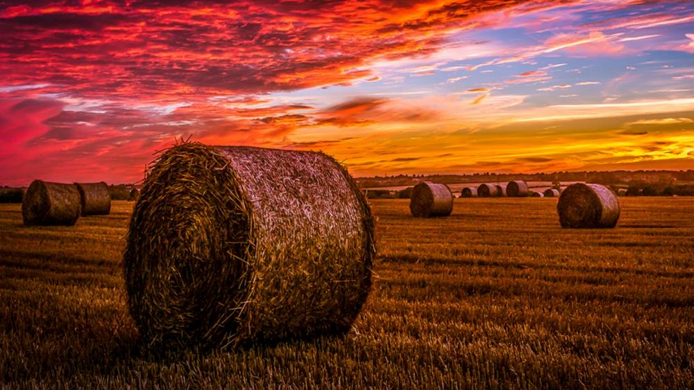 Sunset in the field wallpaper