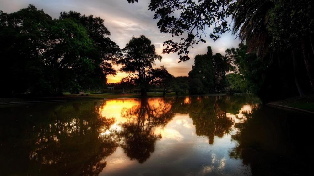 Trees reflected in a pond wallpaper