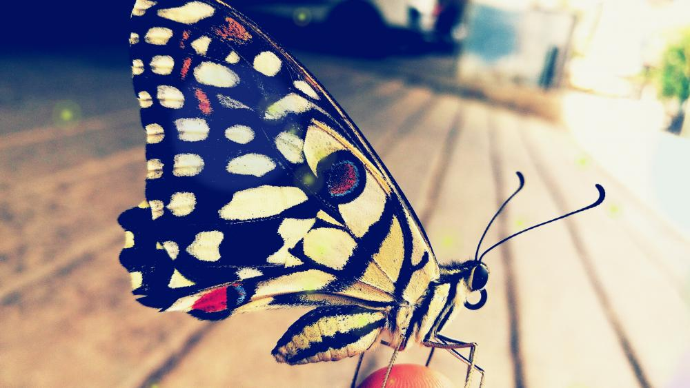 Butterfly close up wallpaper