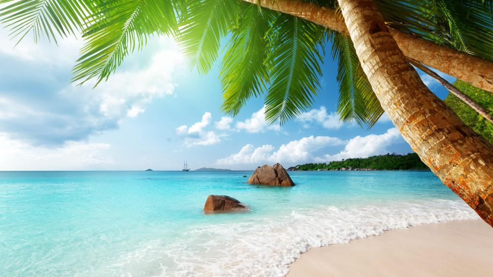 Palms over the turquoise sea wallpaper