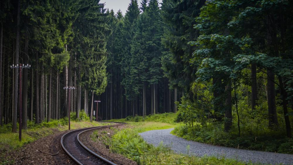 Train tracks in the forest wallpaper
