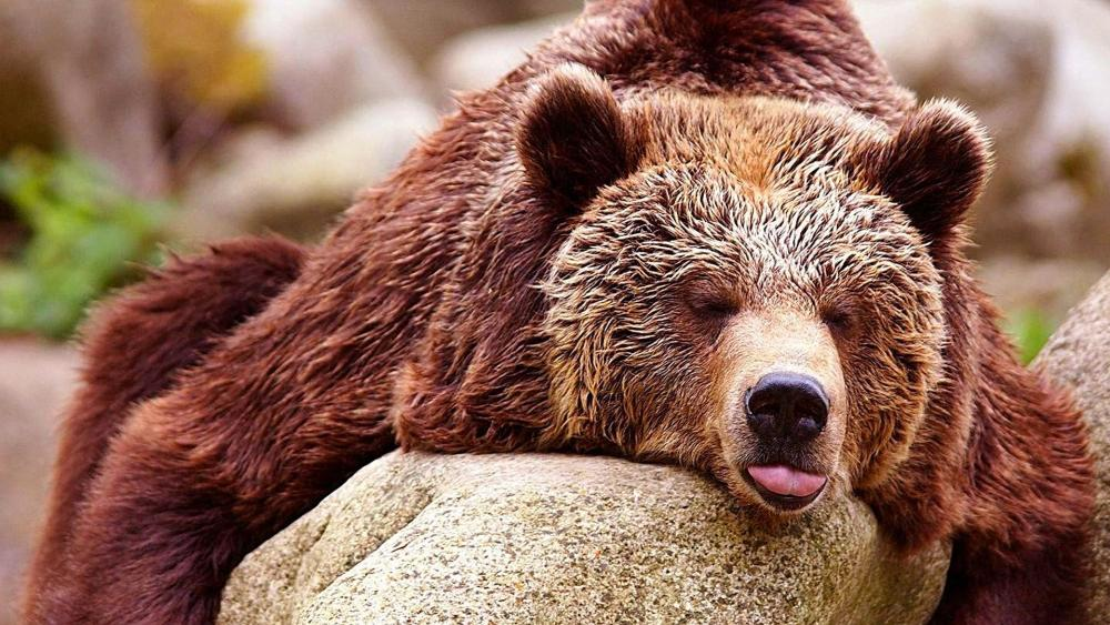 Sleeping Bear wallpaper