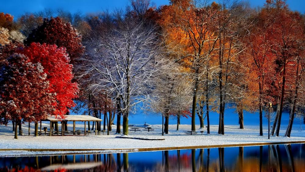 Early winter frost in the autumn  ❄️  wallpaper