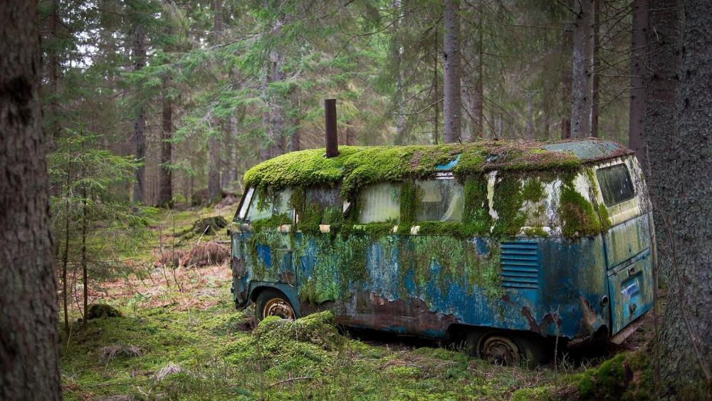 Mossy old Volkswagen in the forest wallpaper