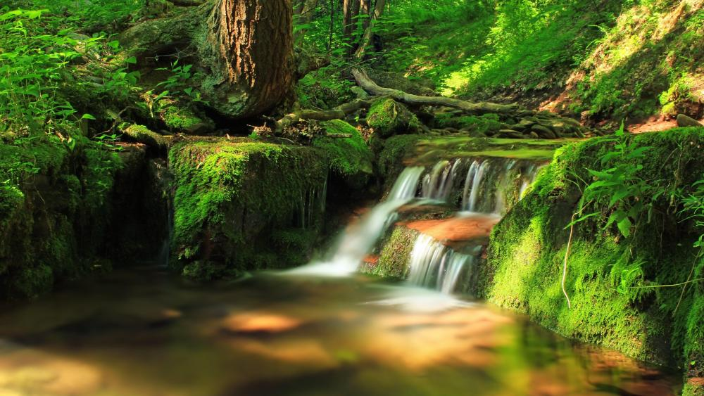 Mountain stream waterfall among the mossy stones wallpaper