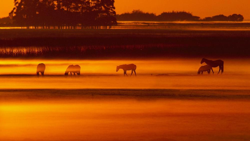 Horse herd in the orange sunrise ☀️ wallpaper