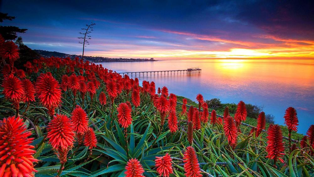 La Jolla hilly seaside view - San Diego, California wallpaper