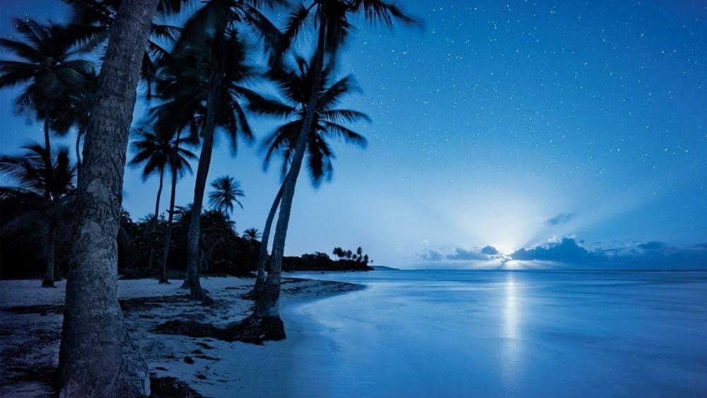 Starry night sky over the beach wallpaper