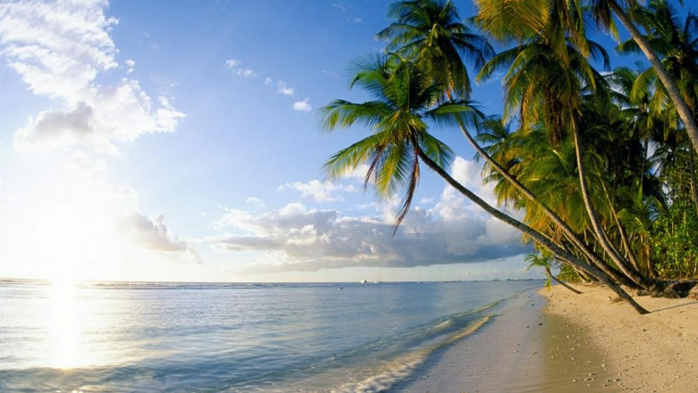 Trinidad and Tobago seashore wallpaper