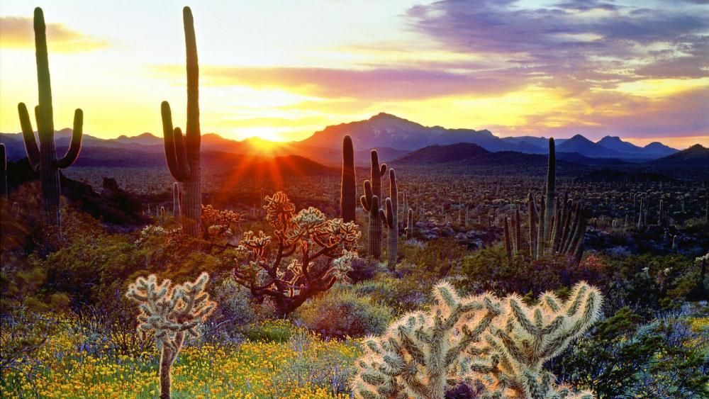 The vegetation of the Sonoran Desert at sunset wallpaper