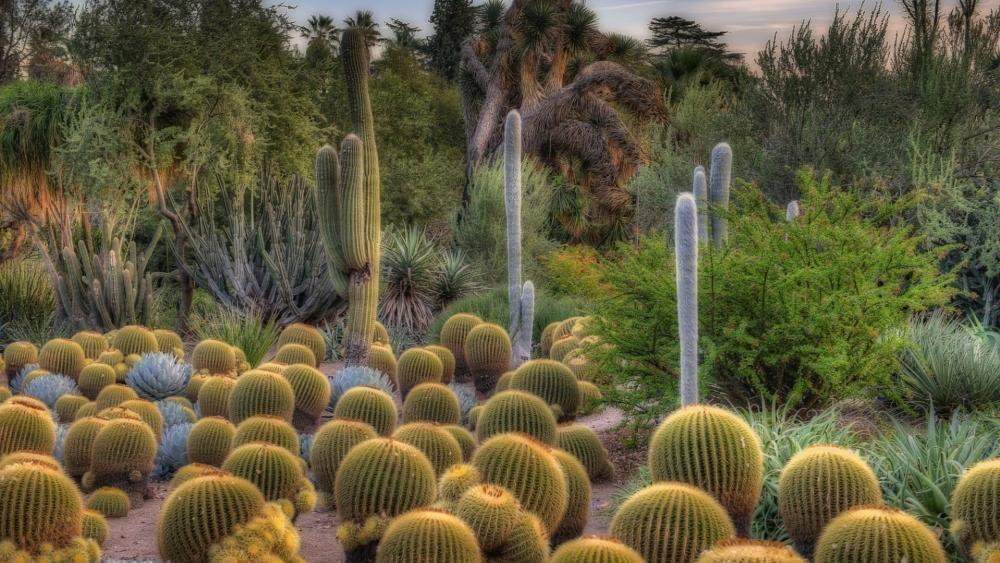 Cacti garden wallpaper