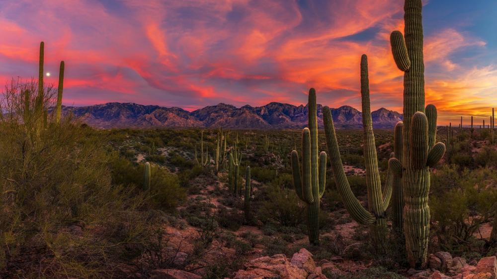 Sunrise over Honey Bee Canyon Park, Oro Valley  wallpaper