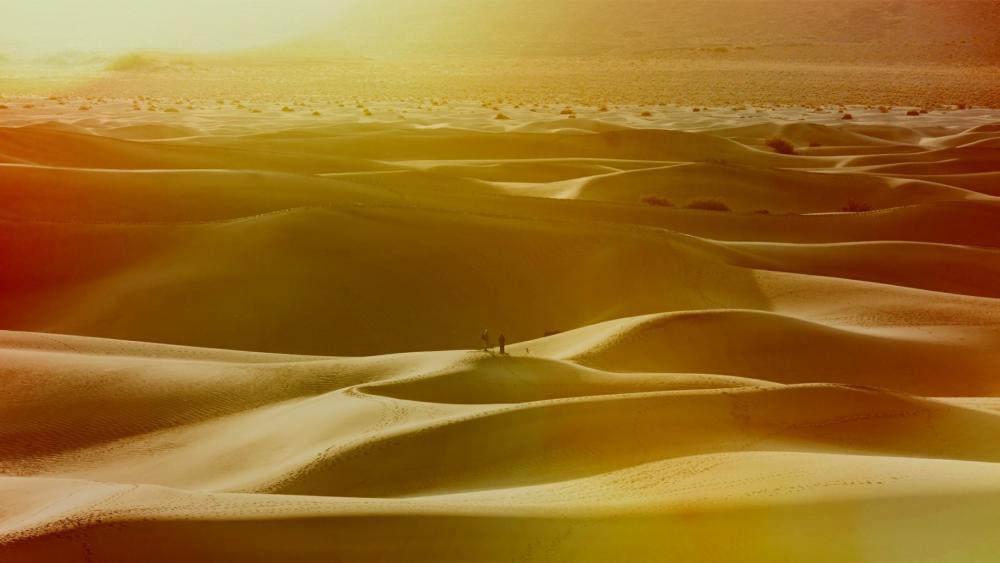 Sand dunes in the desert wallpaper
