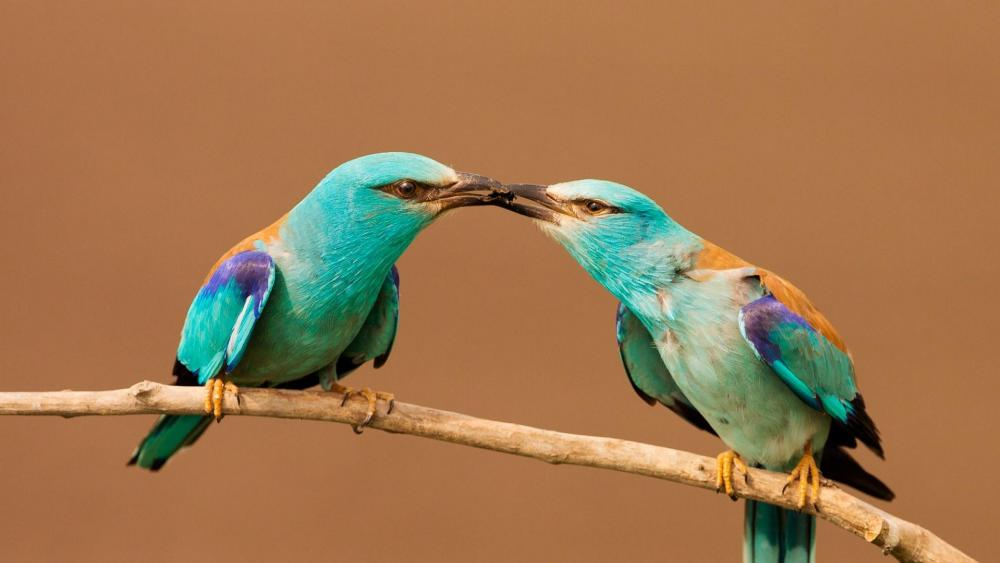 Turquoise bird couple wallpaper