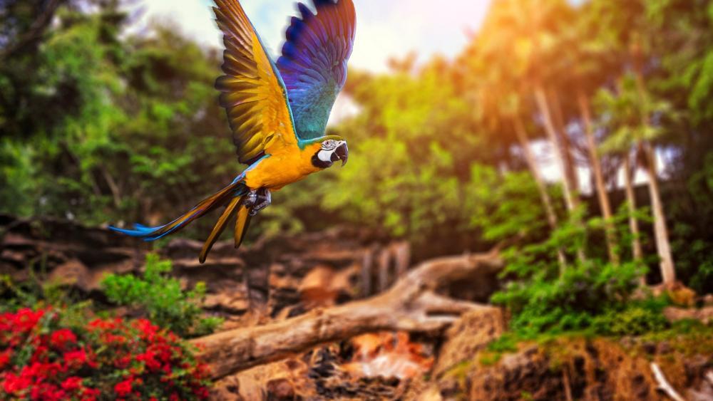 Parrot flying wallpaper
