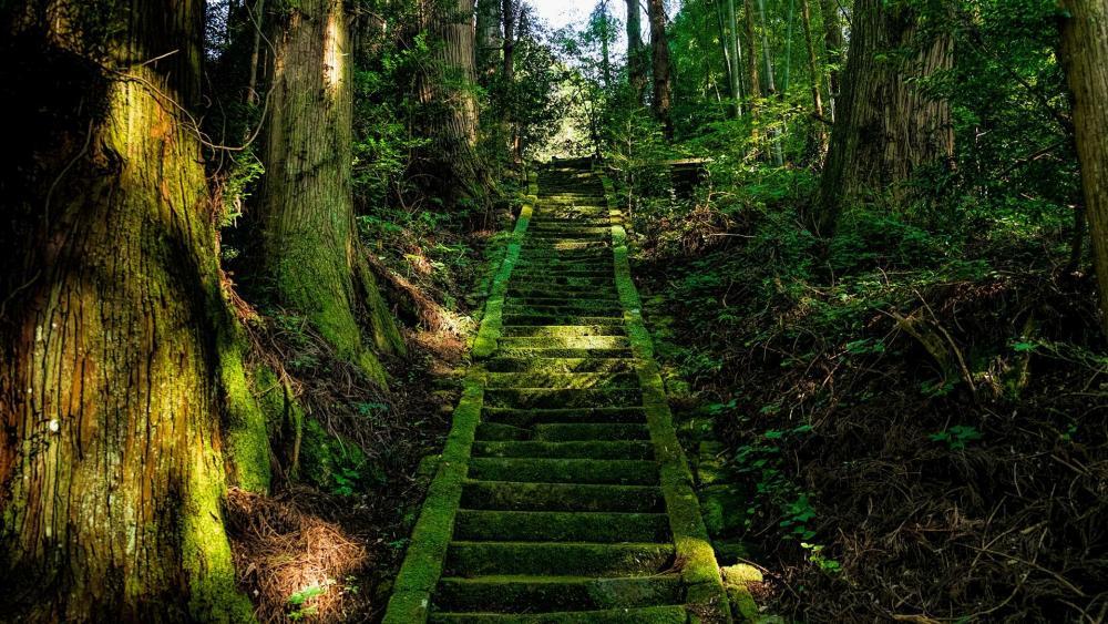 Kamishikimikumanoza forest shrine - Japan wallpaper