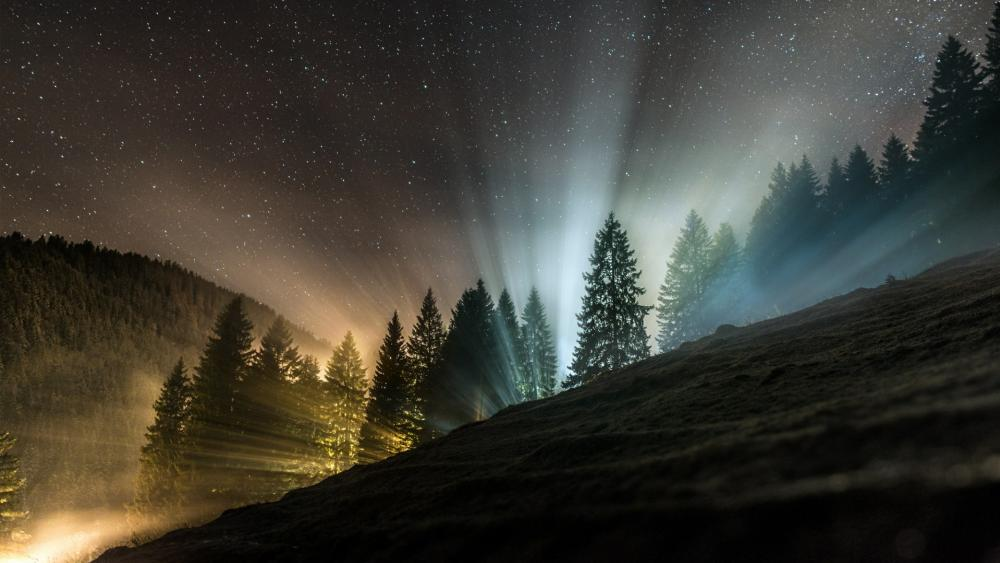 Rays of light through the night forest wallpaper