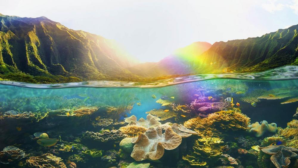Hawaiian Coral Reefs wallpaper