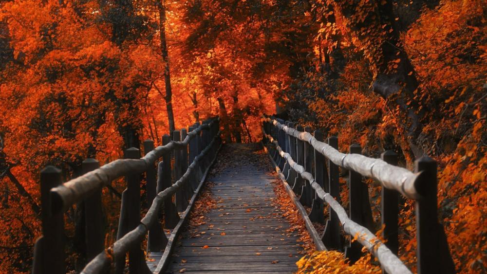 Wooden bridge among the autumn trees    wallpaper