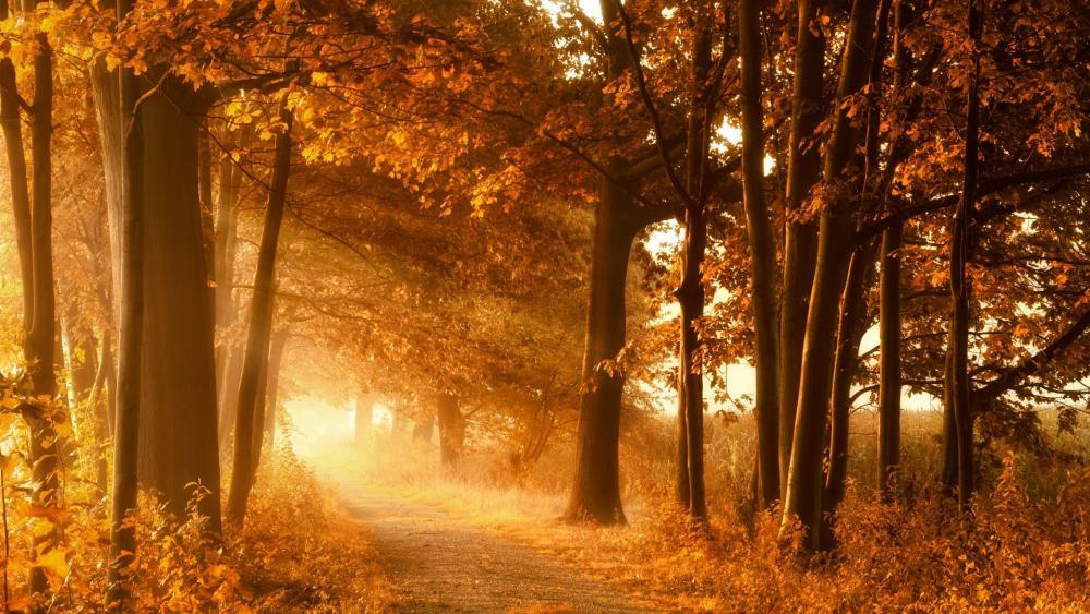 Path in the autumn sunlight wallpaper