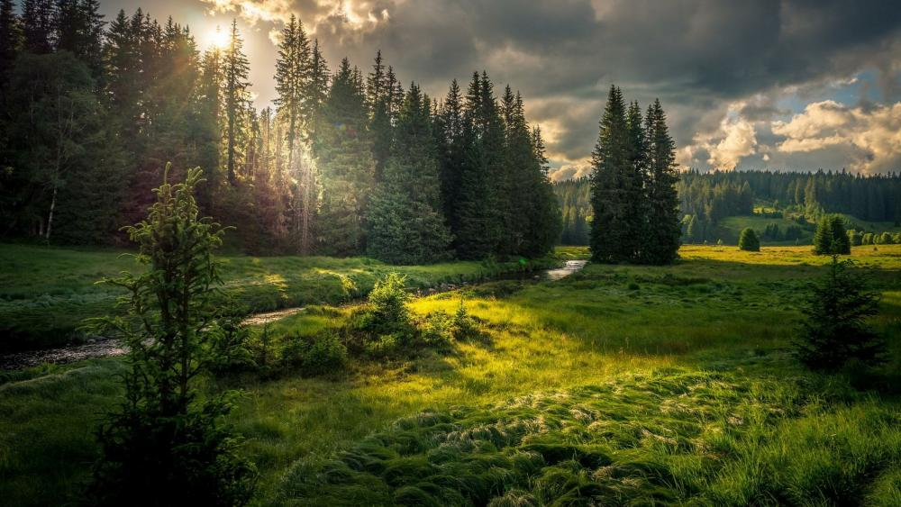 Sunlight in the forest field with a brook wallpaper