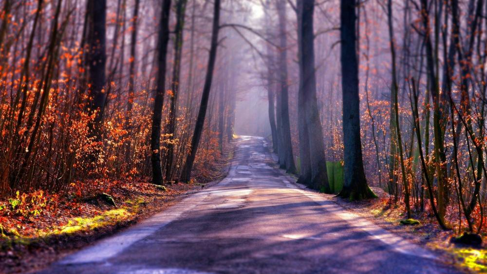 Autumn forest road  ️ wallpaper