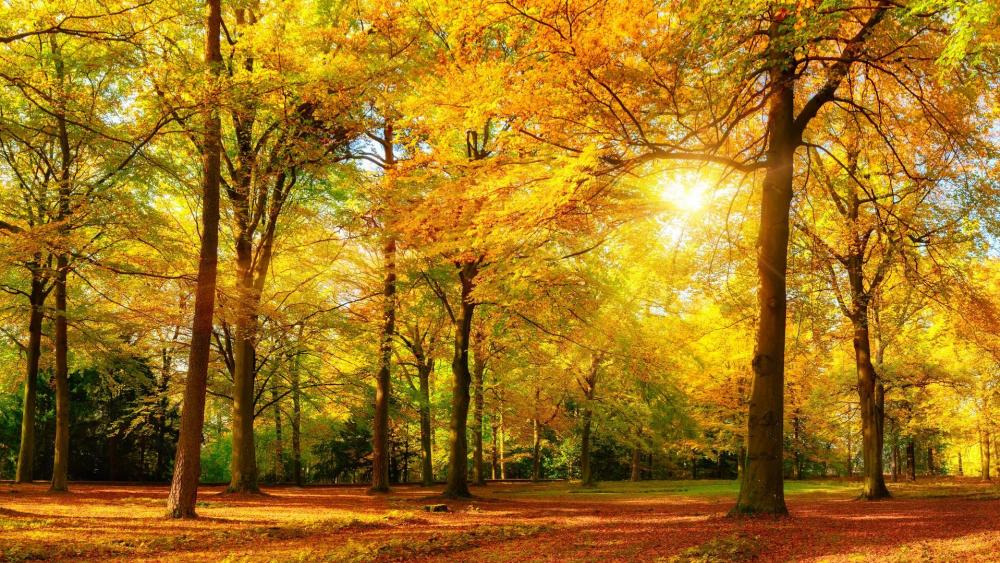 Autumn sunshine in the forest  wallpaper