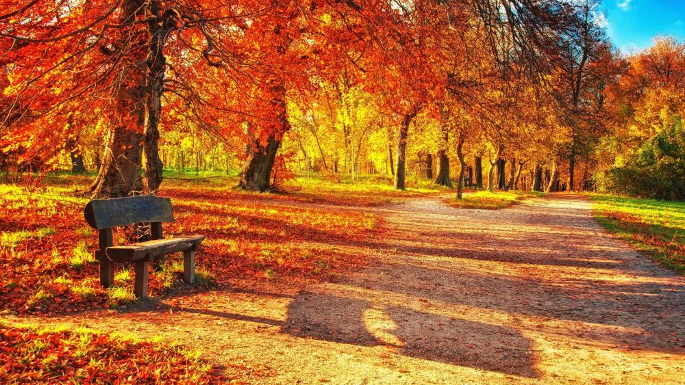 Autumn forest with a bench wallpaper