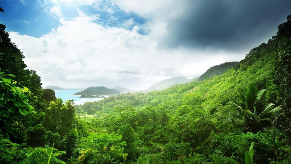 Jungle in Praslin, Seychelles   wallpaper