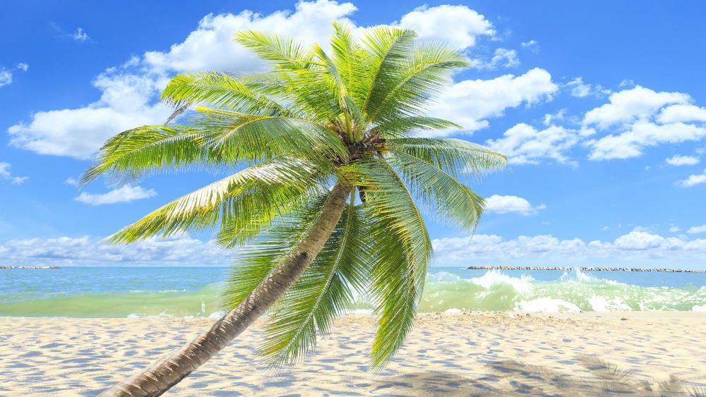 Single palm tree on the sandy beach  wallpaper
