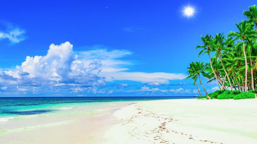 Sunny beach    wallpaper